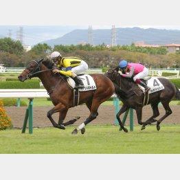 新馬勝ちは阪神