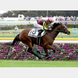 東京では大外18番から新馬勝ち