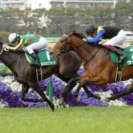 【土曜東京11R・青葉賞】前走レート最高値のウーリリが今度は突き抜ける