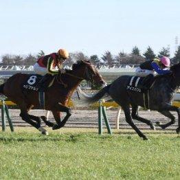 【土曜東京10R・メトロポリタンS】成長著しい4歳馬アイスバブル3連勝