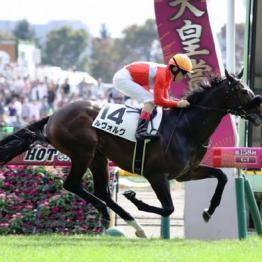 【土曜東京11R・プリンシパルS】藤沢和厩舎ルヴォルグ ダービー最終切符をゲット