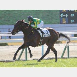 新馬勝ちは京都