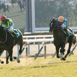 【土曜京都11R・都大路S】前走の③着が強かった素質馬サトノフェイバー