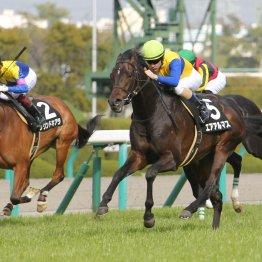 【日曜京都10R・錦S】末脚強靭エアアルマスの2連勝