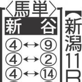 【土曜新潟11R・大日岳特別】ハイラップでも②着に粘ったズアーの前走を評価