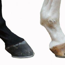 梅雨時の緩い馬場でもつなぎが立っている馬は地面をしっかりつかめる