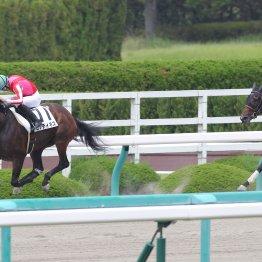 【播磨の土曜競馬コラム・インディアT】