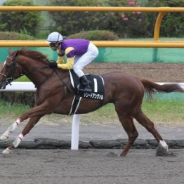 【武田の日曜競馬コラム・渡島特別】