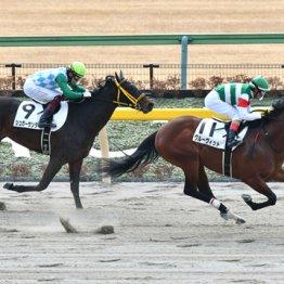 【中京記念】女遊びの軍資金稼ぎは3歳馬に託す