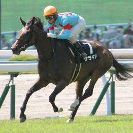 【大谷の日曜競馬コラム・関屋記念】