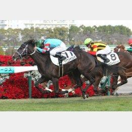 ヤマニンベリンダは新馬勝ち以来のチャンス