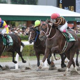 札幌エルムSは評価すべき馬がいっぱい