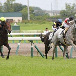 【新谷の土曜競馬コラム・英彦山特別】