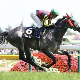 【武田の土曜競馬コラム・日本海S】