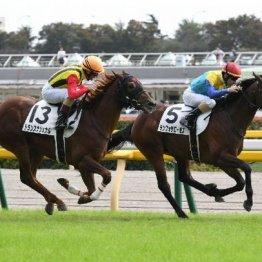 【大谷の日曜競馬コラム・札幌記念】