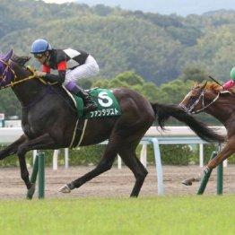 【武田の日曜競馬コラム・北九州記念】