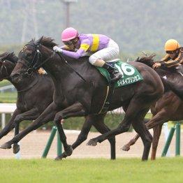 札幌記念と北九州記念の④着馬は次走が楽しみ