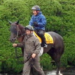 【キーンランドC】昨年の勝ち馬ナックビーナスも侮れない