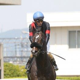 【亀井の土曜競馬コラム・WASJ第2戦】