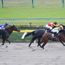 【大谷の土曜競馬コラム・BSN賞】