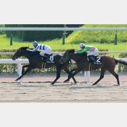 九州スポーツ杯が強い競馬