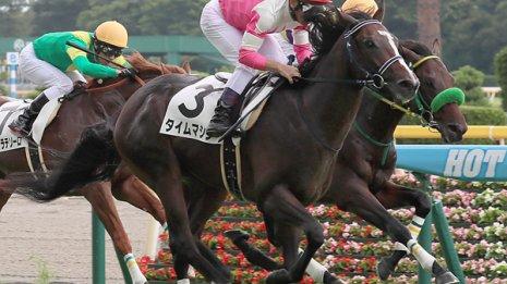 距離適性の見極めは馬の性格も大きな要素になる