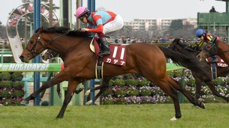 【新潟記念】唯一の重賞2勝馬 カデナがサマー王者だ
