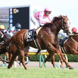 新潟でブレークした東の3歳馬2頭