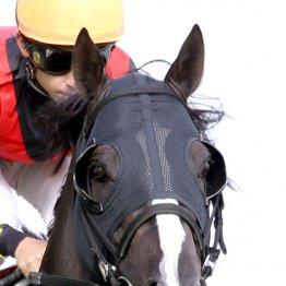 パドックでは馬の「顔」もチェックする