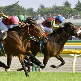 【大谷の土曜競馬コラム・レインボーS】