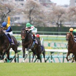 【神戸新聞杯】皐月賞①②着 サートゥルナーリア、ヴェロックス始動