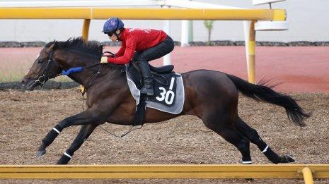 【神戸新聞杯】ヴェロックス 〝静〟の調整で6F81秒6