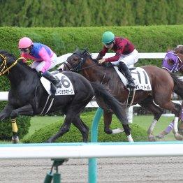 【新谷の土曜競馬コラム・大阪スポーツ杯】
