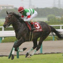 【神戸新聞杯】サートゥルナーリア秋初戦は圧勝