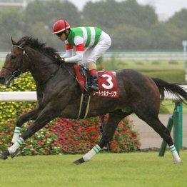 サートゥルナーリアは簡単には負けないレベルの馬に