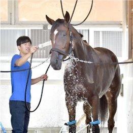 【秋華賞】出走馬の特選情報