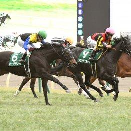 【秋華賞】牝馬3冠最終戦 今度こそ金を取る! 注目の1勝馬3頭