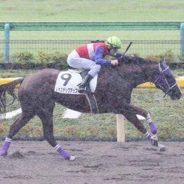 【飯島の月曜競馬コラム・昇仙峡特別】