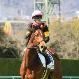 【武田の月曜競馬コラム・オパールS】