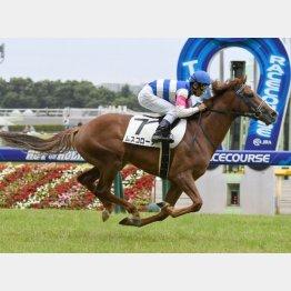 東京千四で新馬勝ち