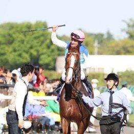 【富士S】GI馬2頭を筆頭に高メンバー