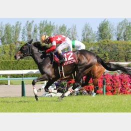 京都新聞杯ではのちのダービー馬に勝利