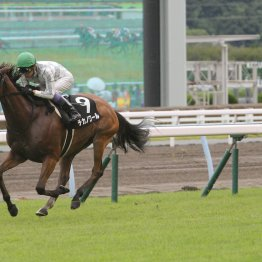 【藤岡の土曜競馬コラム・トルマリンS】