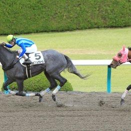 【マリナの日曜競馬コラム・京都12R】