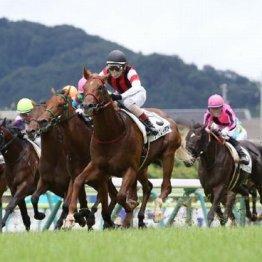 【マリナの日曜競馬コラム・東京3R】