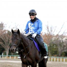 【マイルCS】出走全馬の特選情報