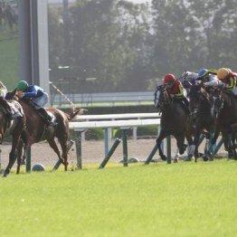 【飯島の土曜競馬コラム・京都12R】