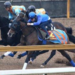【阪神JF】出走馬の特選情報