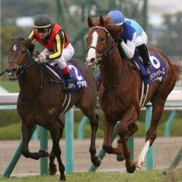 【朝日杯フューチュリティS】重賞勝ち馬サリオス、レッドベルジュール、タイセイビジョンらが激突