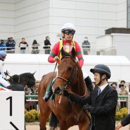 【藤岡の土曜競馬コラム・阪神C】